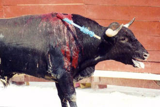 NO to bullfighting